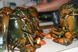 Tenderizing Lobsters