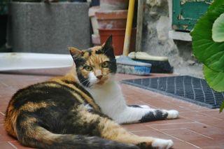 Tina's cat
