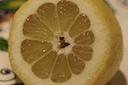 Positano Lemon