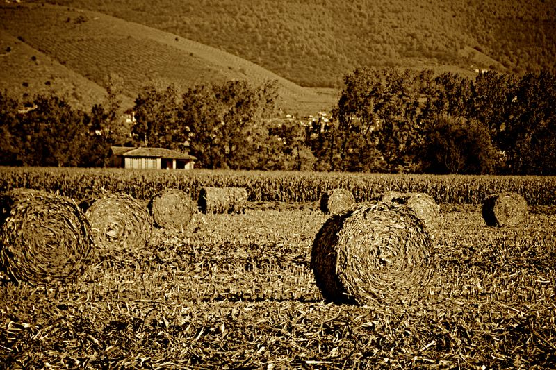 Bringing in the sheaves (1)