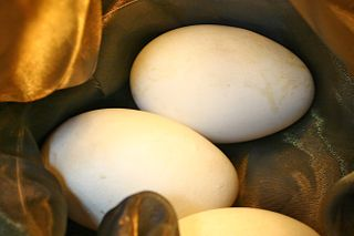 Golden Goose Egg Nest