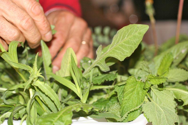 Fresh herbs and greens