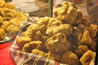 Tartufo Bianco White Truffles