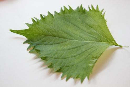 Shiso leaf