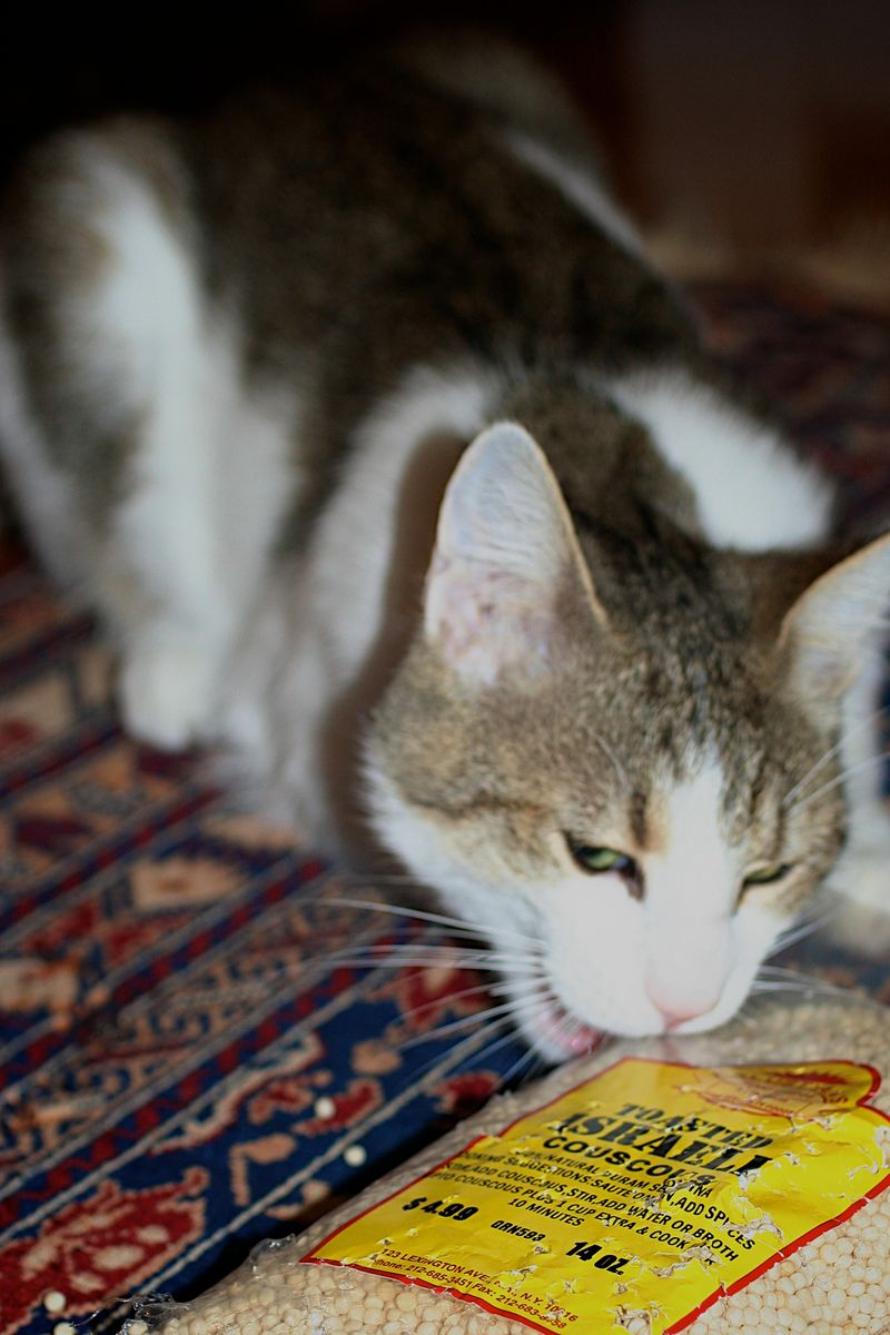 Cats love Cous Cous?