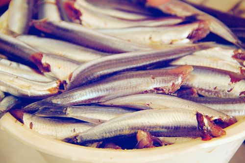 Fresh Anchovies (1)