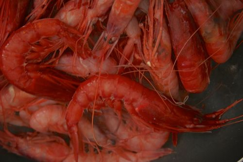 Red shrimp Gamberi rossi