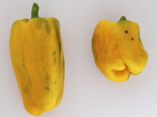 Fruta Peppers