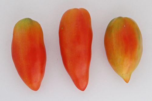 Fruta Tomato
