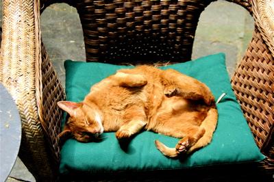 Rustycat