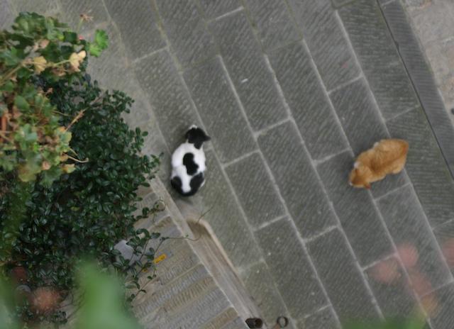 Cat_standoff