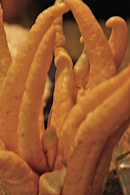 Fingered_citron