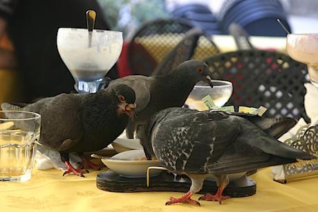 Pigeon_aperitivo_1