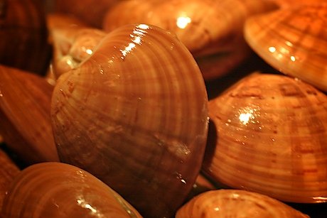 Red_clams